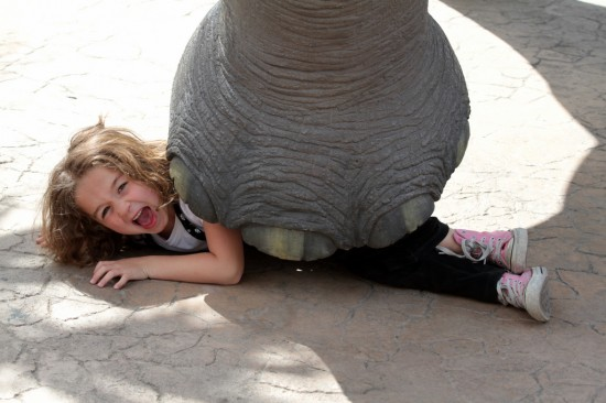 Girl trapped by elephant