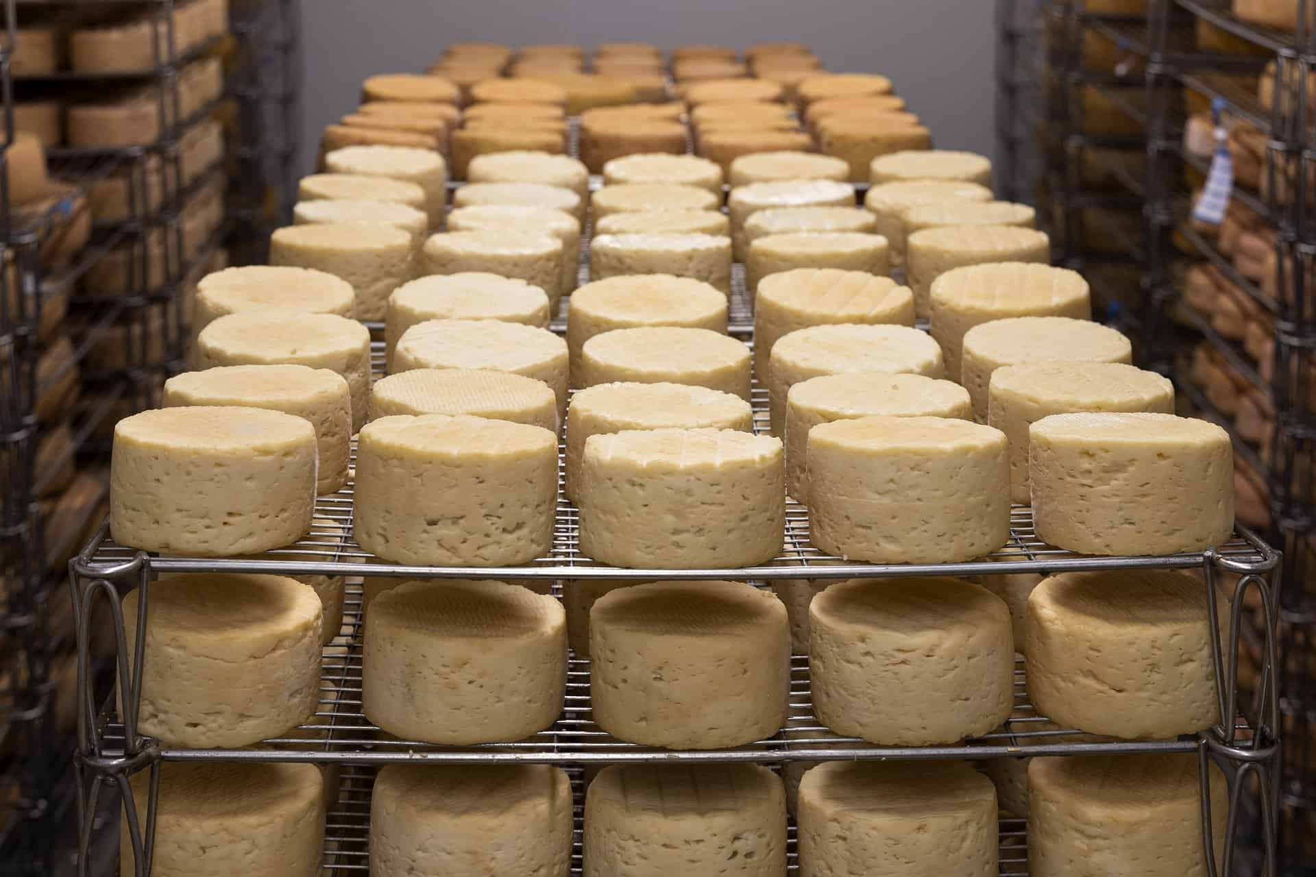 Rolls of freshly made cheese